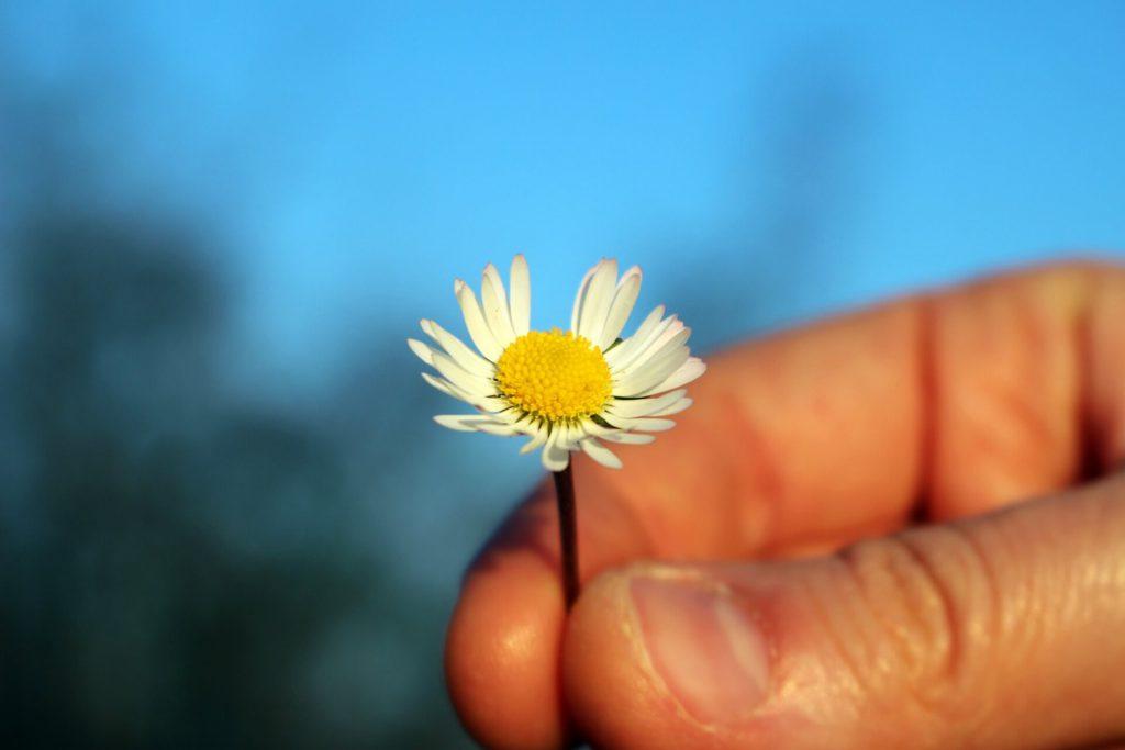 פרח שבו חלק מעלי הכותרת חסרים